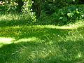 Jardin à l'anglaise - Albert Kahn.jpg