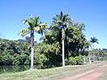 Jd. Botânico4 - panoramio.jpg