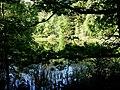 Jeziorko Ankermyr - panoramio.jpg