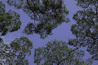 Canopy (biology) Aboveground portion of a plant community or crop