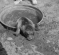 Jonge zeehond, Bestanddeelnr 904-0796.jpg