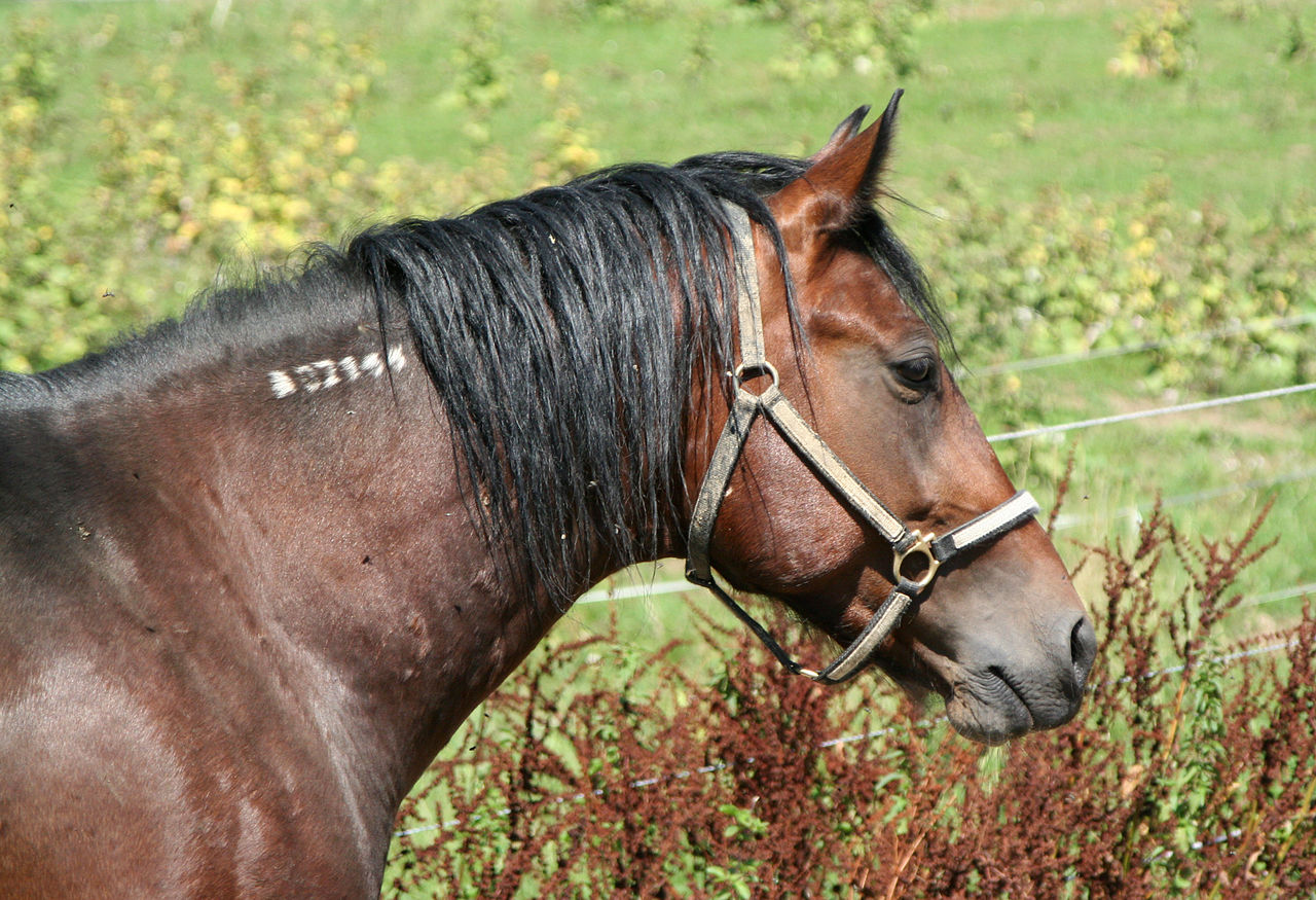 Horse Markings Wikiwand