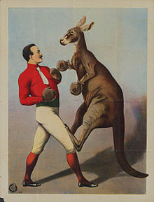 Well dressed man boxing a kangaroo with gloves. Printed in Hamburg, Germany in the 1890s by Adolph Friedländer (1851–1904).