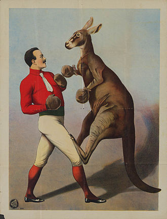 Boxing kangaroo - Kangaroo Boxing sideshow poster from 1890s printed by Adolph Friedländer