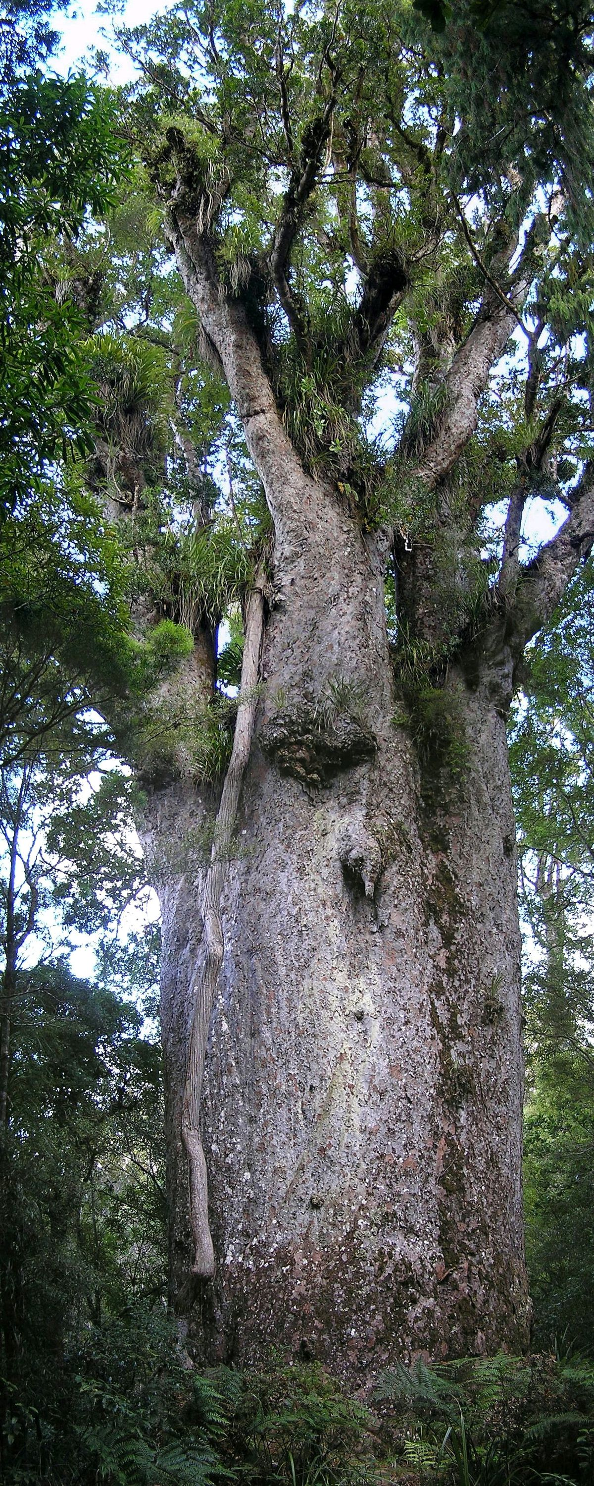 Forestry in New Zealand - Wikipedia
