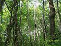 Kedili ağaç longuner - panoramio.jpg