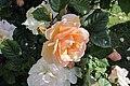 Kilkenny Castle Gardens, The Parade, Kilkenny (506838) (28401566104).jpg