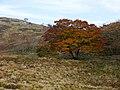 Kimigahatacho, Higashiomi, Shiga Prefecture 527-0202, Japan - panoramio (28).jpg