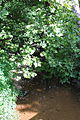 Kipps Run looking downstream in its lower reaches.JPG