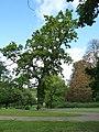 Knockholt oak trees (3).jpg