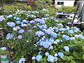 Kobe Municipal Arboretum in 2013-6-22 No,4.JPG