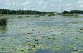 Kokemäenjoen suistoa Meri-Porissa 3.jpg