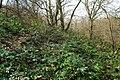 Korina 2013-03-18 Mahonia aquifolium 10.jpg