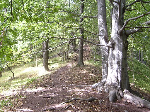 Kozlov2008a