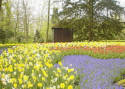 Keukenhof tulip garden in Lisse, Netherlands.