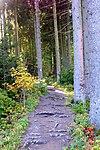 LSG GS 00059 Harz (LK Goslar) - Weg zwischen neuem und oberem Grumbacher Teich (13).jpg