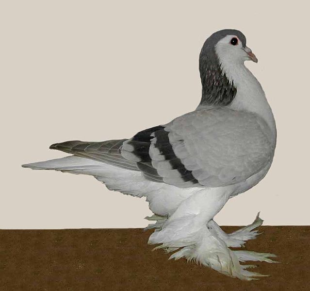 File:Lahore(silver barred).jpg
