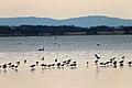 Lake Burrumbeet (24665824542).jpg