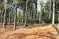 Landschaftschutzgebiet Striegistal (11).jpg