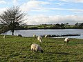 Langley Reservoir (2) - geograph.org.uk - 601648.jpg