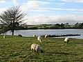 Langley Reservoir (2) - geograph.org.uk - 601648.jpg