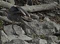 Le Grand Heron 3.jpg