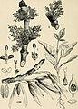 Le propriétaire-planteur; semer et planter traité pratique et économique des reboisements et des plantations des parcs et jardins (1906) (14784300963).jpg