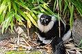 Lemur (26244964199).jpg