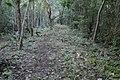 Les forest pyram.jpg