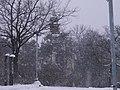 Letenské sady - panoramio (34).jpg