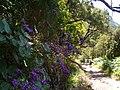 Levada do Risco, Madeira, Portugal, June-July 2011 - panoramio (31).jpg