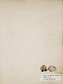 Lichenes Helvetici I II 1842 003.jpg