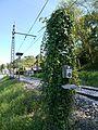 Ligne Bayonne Toulouse Urt 2017 03.jpg