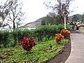 Lihue, Kauai, Hawaii - panoramio (6).jpg