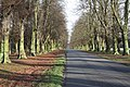 Lime Avenue - geograph.org.uk - 1602277.jpg