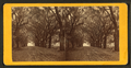 Live Oak Avenue, Bonaventure, from Robert N. Dennis collection of stereoscopic views 13.png