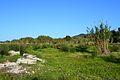 Llera del riu Gorgos per Xàbia.JPG