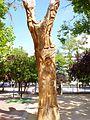 Logroño - Parque Gallarza 3.jpg