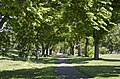 Looking E down double-row of trees from traffic circle - former Constitution Avenue NW terminus - 2013-05-02.jpg