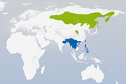 Luscinia calliope distribution.jpg