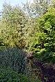 Lutsk Volynska-Volyn botanic garden-near Sapalaivka river-5.jpg