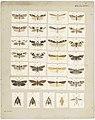 MA I437892 TePapa Plate-XXXI-The-butterflies full.jpg