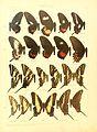 Macrolepidoptera15seit 0037.jpg