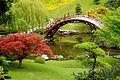 Magic Garden.jpg