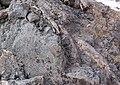 Mammoth bones found at OSU expansion of Valley Football Center - Ribs1 - 24635133015.jpg
