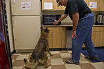 Man's best friend, on and off the battle field 130619-F-ZB149-526.jpg