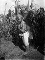 Man bärande svagt skalade kokosnötter i sin ryggkorg. I bakgrunden ett majsfält. Sulawesi - SMVK - 022198.tif