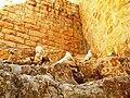 Manastirea Sava (Porumbei ai Pacii pe stanci).jpg