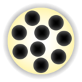 Mancala highlight (9).png