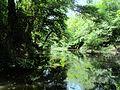 Marsh-Belgrad-Forest2.jpg